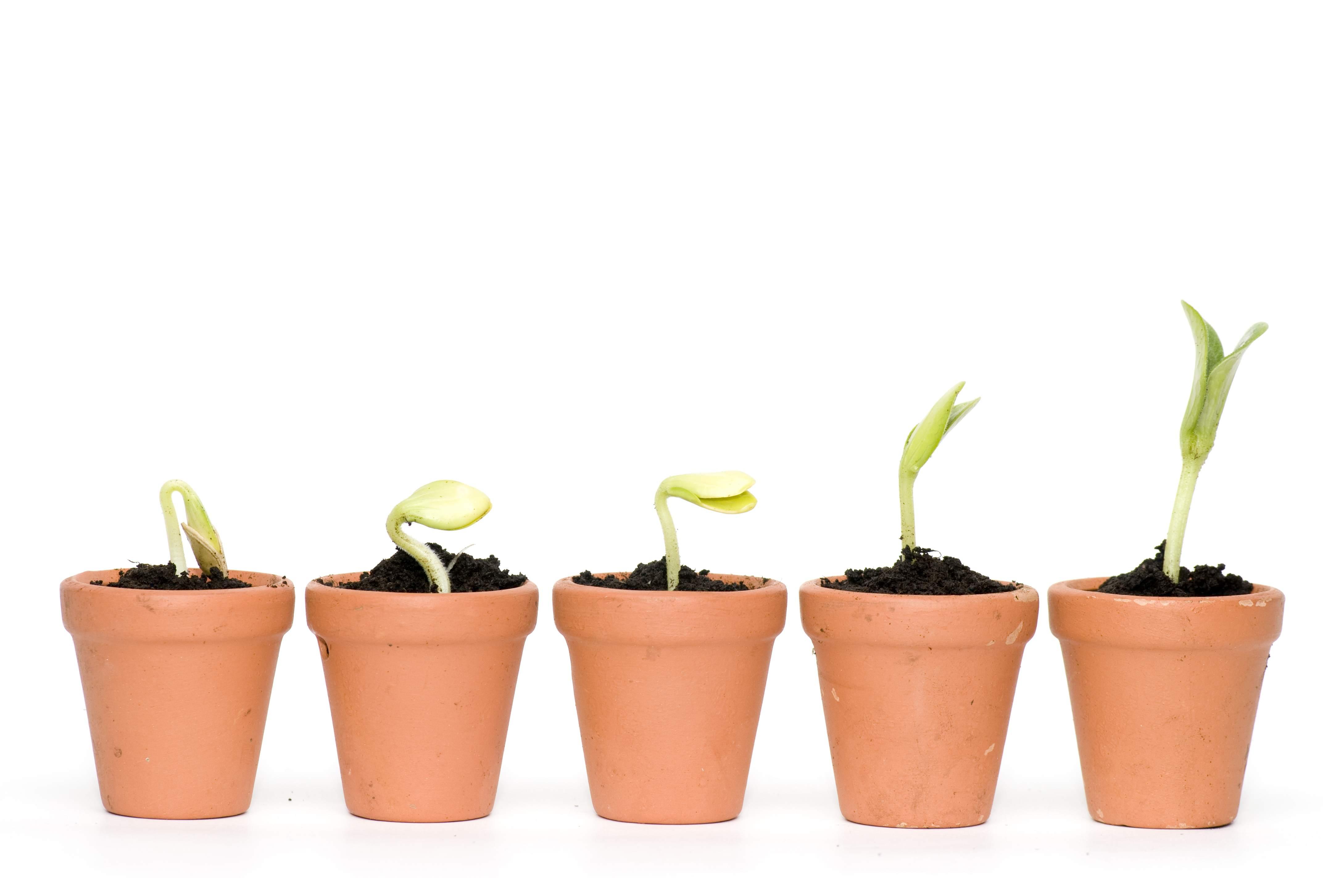seedling development - shutterstock_27567580